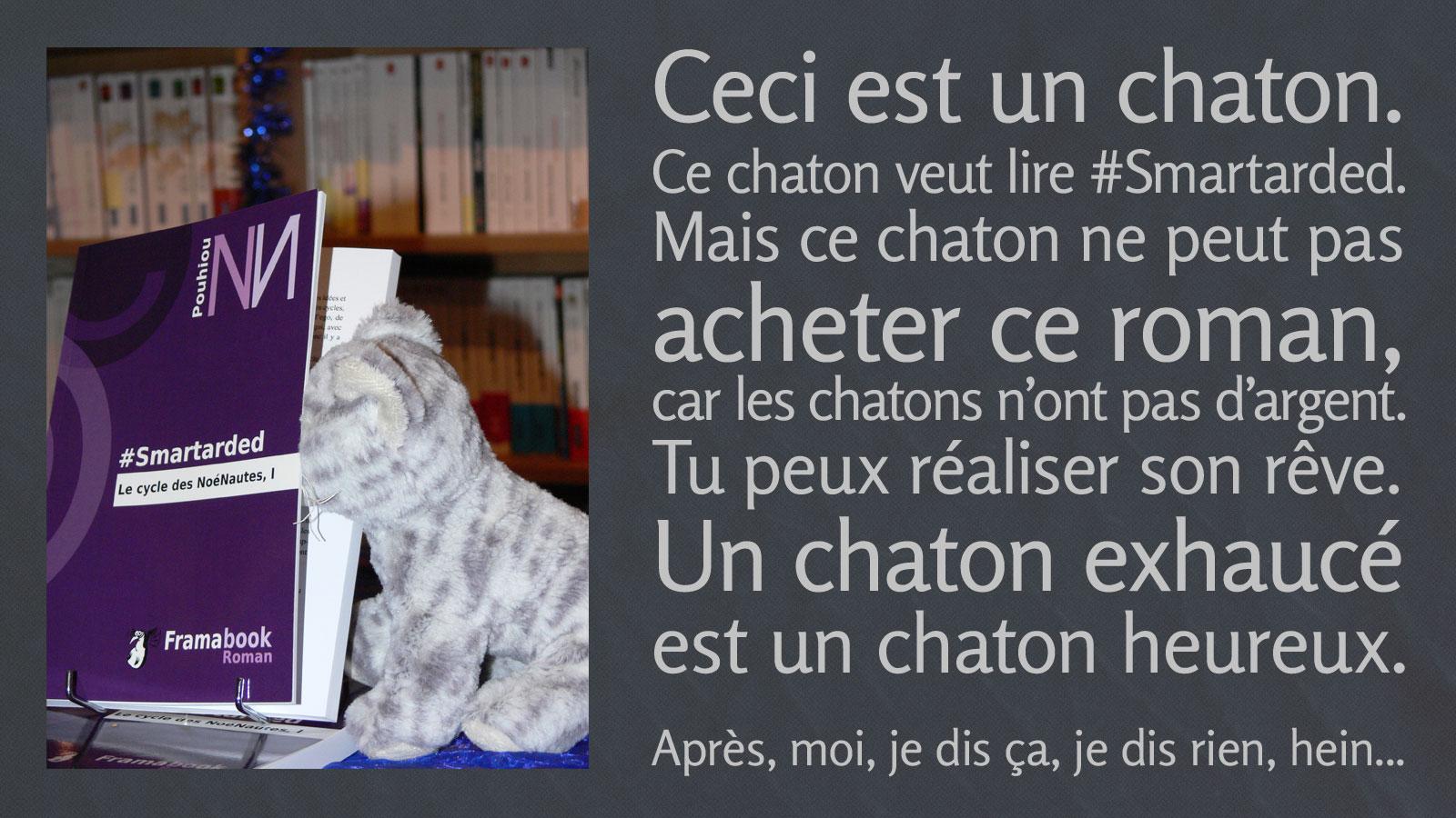 monorchide-chaton-ulule